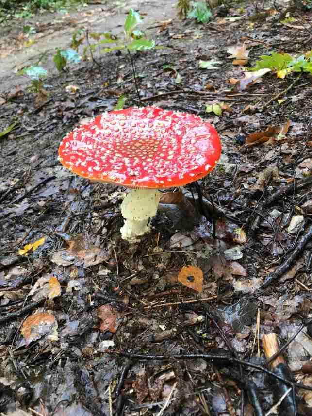 paddenstoelen19_8